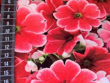 Tim: digitaal bedrukte tricot: zomerbloemen rood