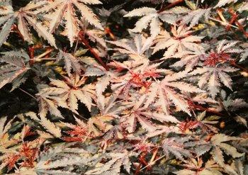 Tim: digitaal bedrukte tricot: herfstbladeren, prachtig!